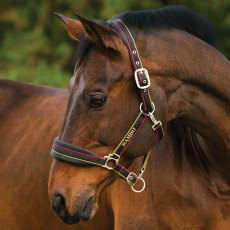 Rambo Padded Head Collar