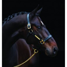 Amigo Padded Leather Headcollar
