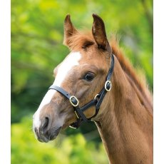 Shires Adjustable Foal Headcollar