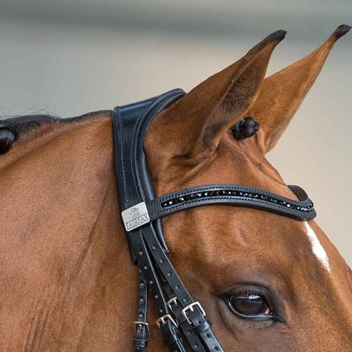 Fairfax Double Bridle Headpiece
