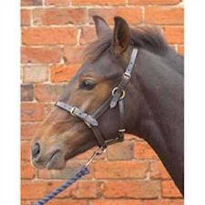 Hy Leather Foal Head Collar